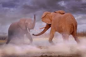 Exposición organizada por Lunwerg y patrocinada por Fundación AXA. Un espectacular viaje por el planeta a través de los animales salvajes captados en su hábitat natural por la cámara de Steve Bloom, uno de los mejores fotógrafos del mundo animal.
